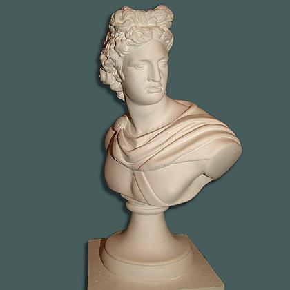 Apollo bust 36cm
